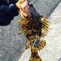 かさごくんさんの滋賀県甲賀市での釣果写真