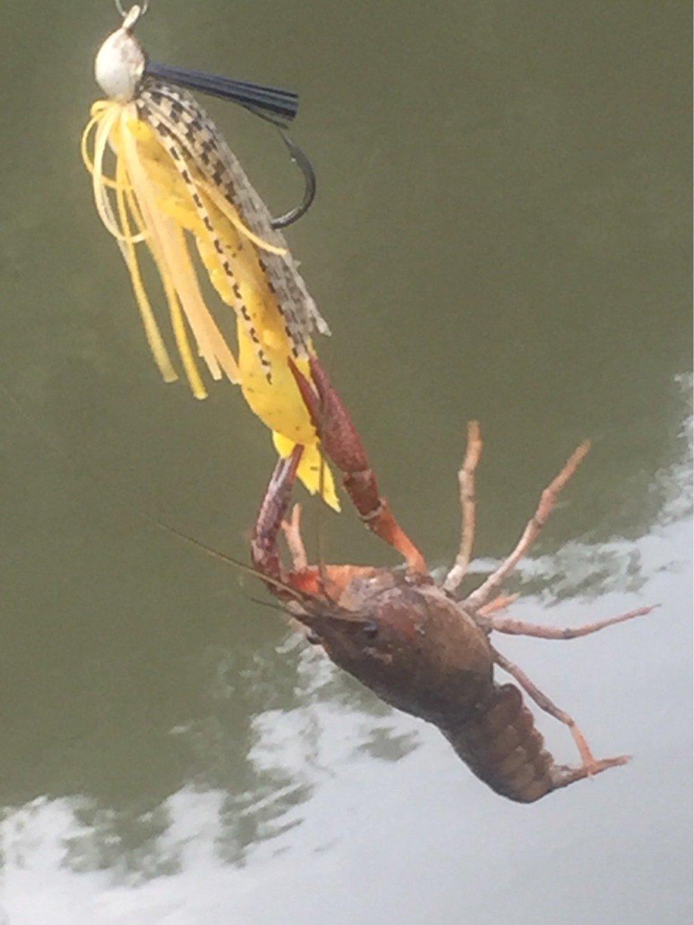 UGTさんの投稿画像,写っている魚は