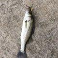 キモ兄さんの鹿児島県熊毛郡での釣果写真