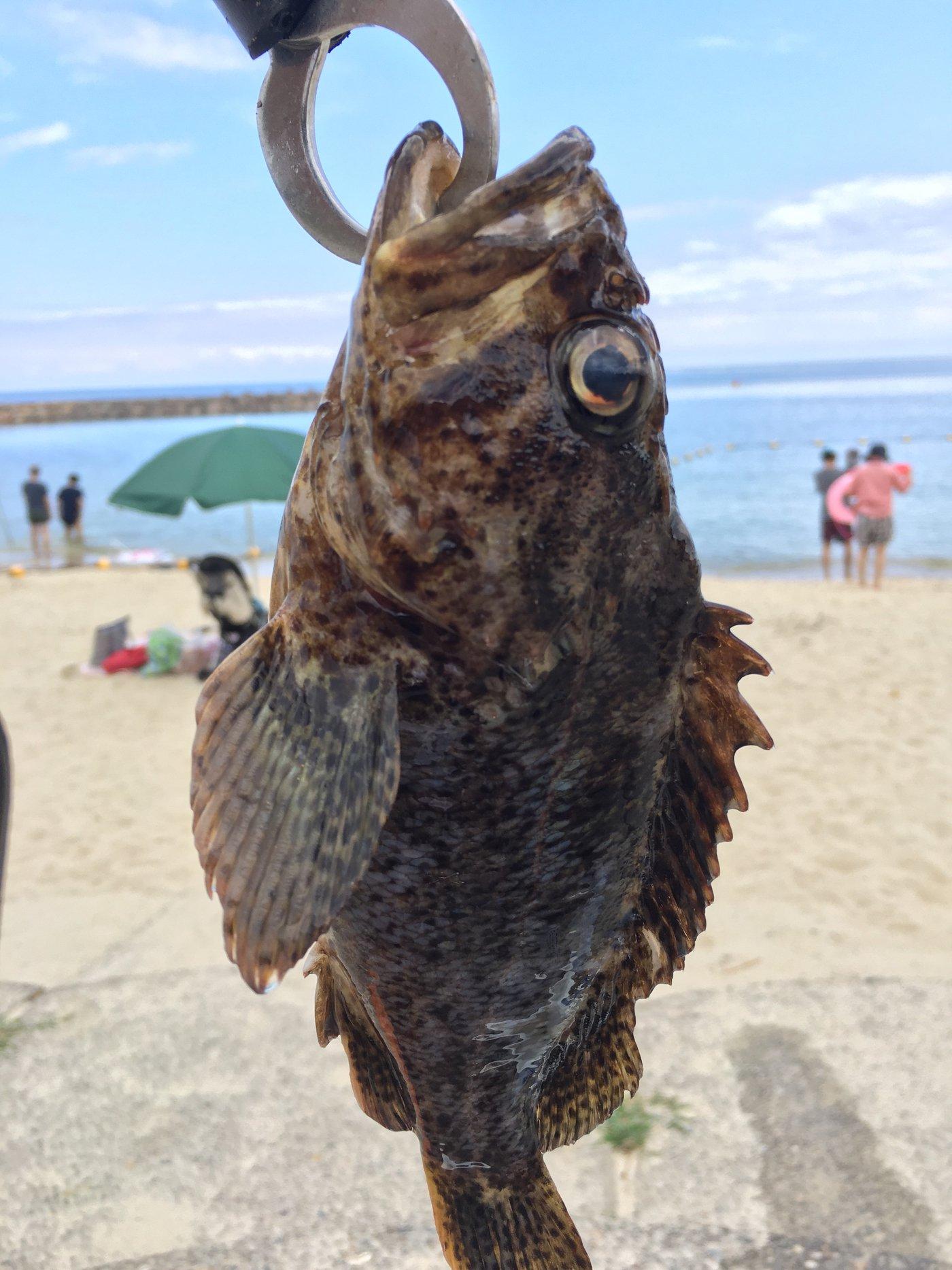 はんたろうさんの投稿画像,写っている魚はカサゴ,ギンポ,キジハタ,ウマヅラハギ,アカササノハベラ