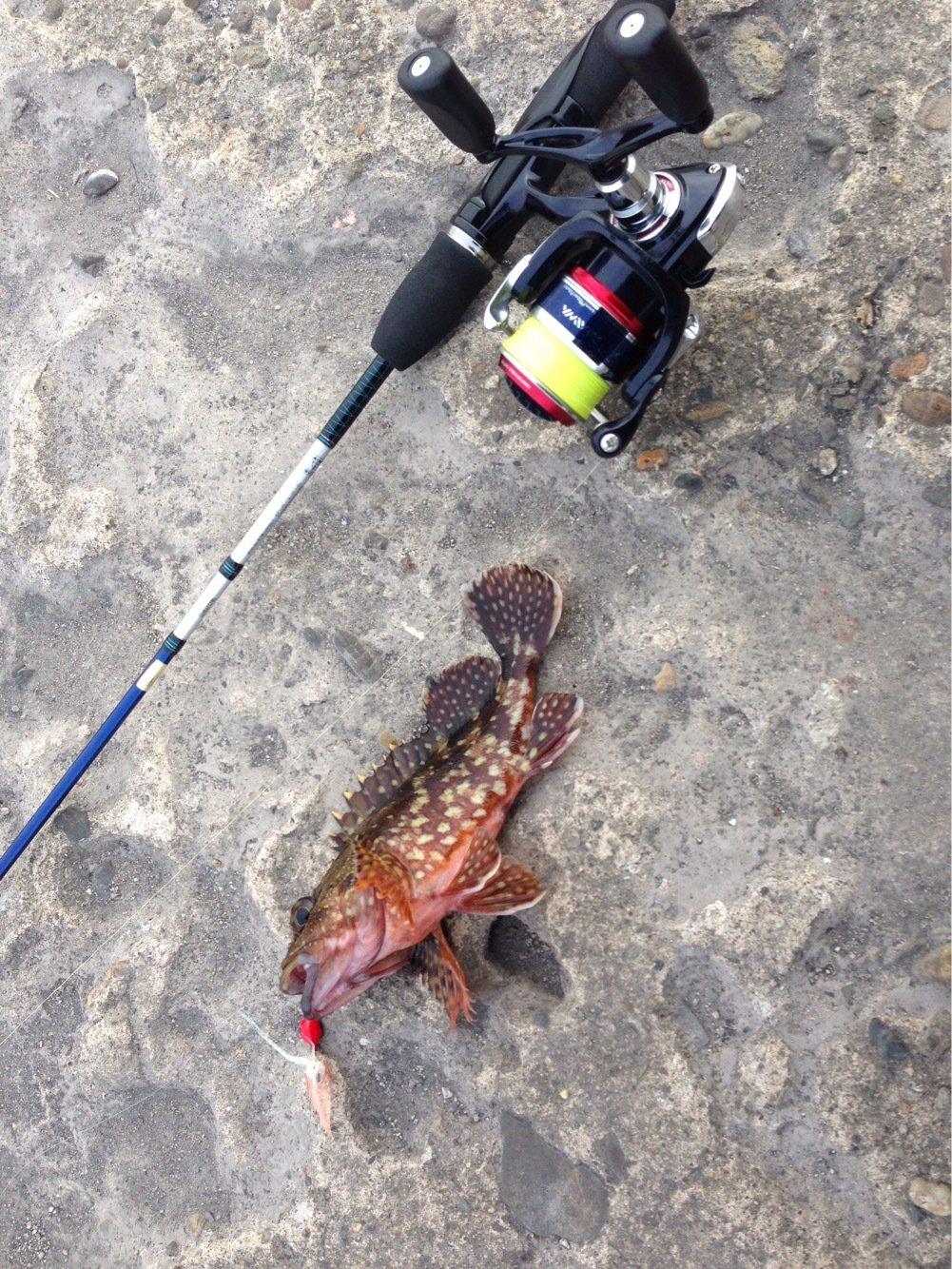 せいしょうさんの投稿画像,写っている魚はカサゴ