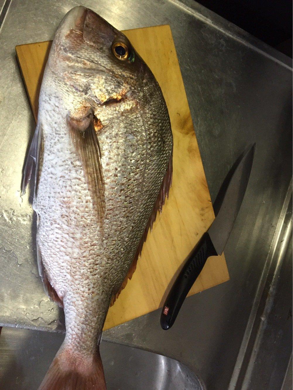 せいしょうさんの投稿画像,写っている魚はマダイ