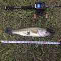 aRuSuさんの岩手県滝沢市での釣果写真