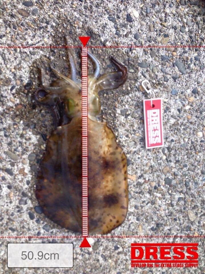 たいせーさんの投稿画像,写っている魚はアオリイカ