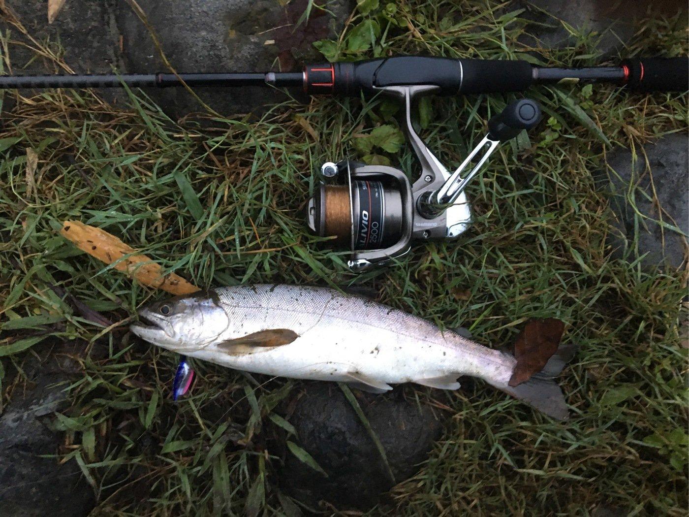 akさんの投稿画像,写っている魚はニジマス