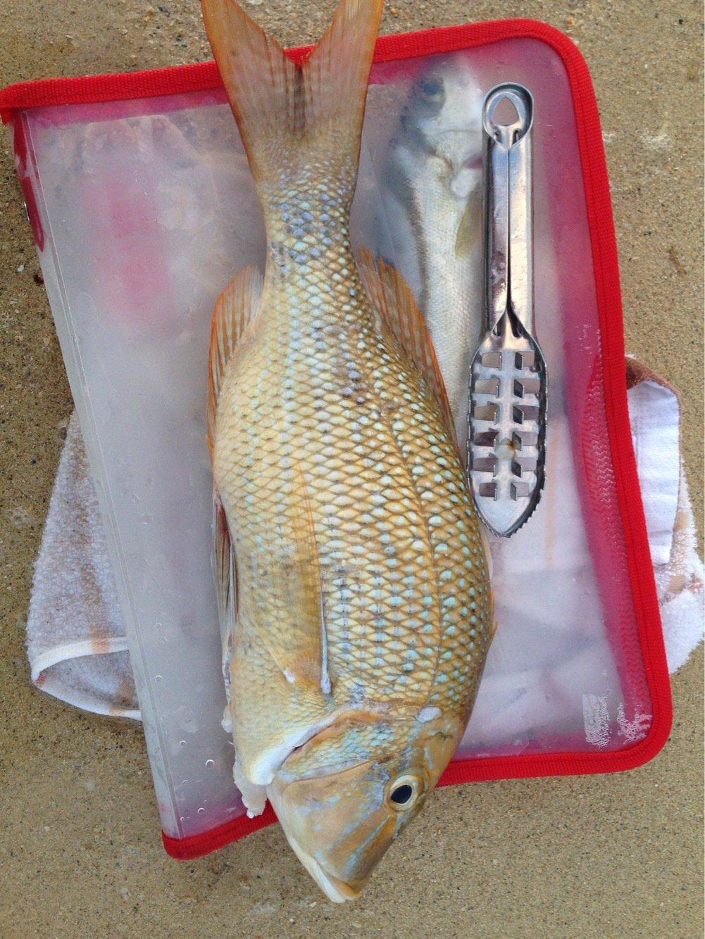 びたろーさんの投稿画像,写っている魚はハマフエフキダイ