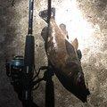 かずさんの北海道目梨郡での釣果写真