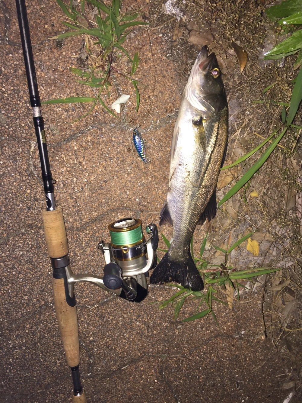 thegskさんの投稿画像,写っている魚はスズキ