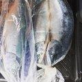 ワカマンさんのカラフトマスの釣果写真
