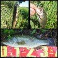 Chubby Takaさんの愛知県津島市での釣果写真