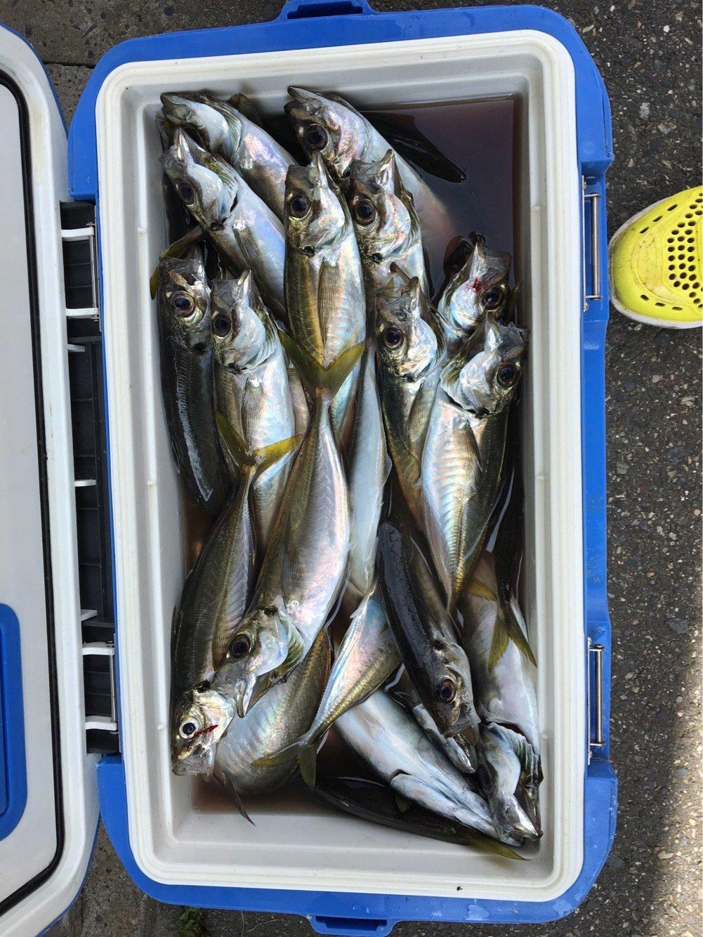 aoricyuさんの投稿画像,写っている魚はアジ