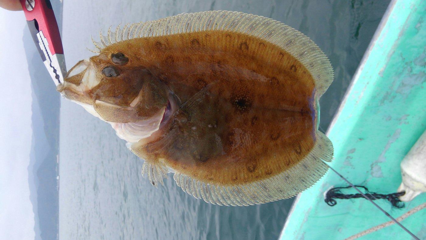 mrfjさんの投稿画像,写っている魚はガンゾウビラメ