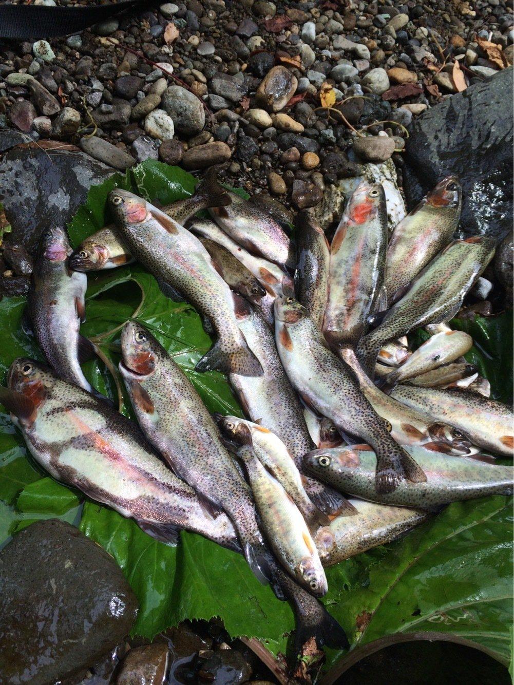 なはなは太郎さんの投稿画像,写っている魚はニジマス