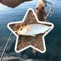 よきとさんの福岡県糸島市でのエソの釣果写真