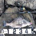 kjTakuさんの佐賀県伊万里市での釣果写真