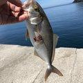プラムさんの岡山県真庭郡での釣果写真