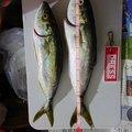 海猫さんの宮城県宮城郡での釣果写真