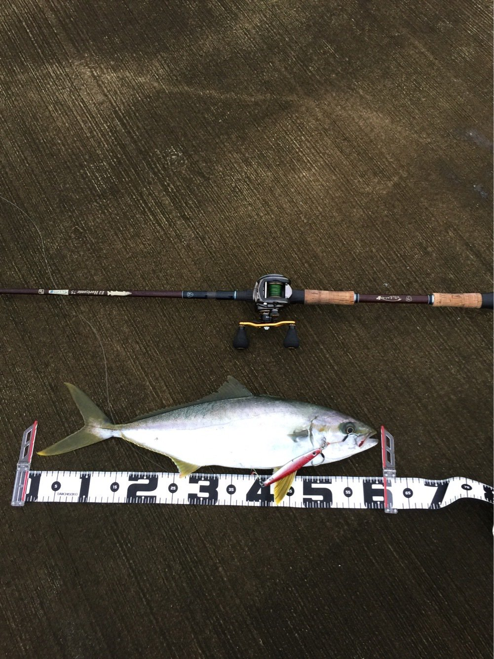 まるしん釣り具さんの投稿画像,写っている魚はワラサ