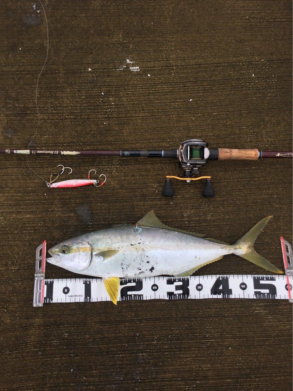まるしん釣り具さんの投稿画像,写っている魚はブリ