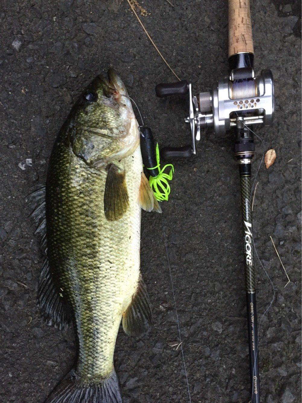 ひでちんさんの投稿画像,写っている魚はブラックバス