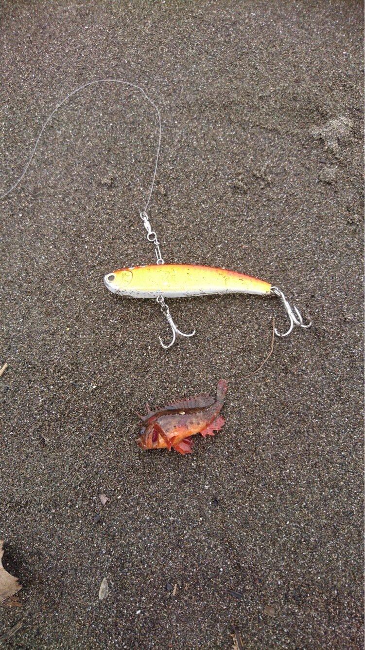 ziiさんの投稿画像,写っている魚は