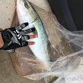 すかれとさんの山形県飽海郡での釣果写真