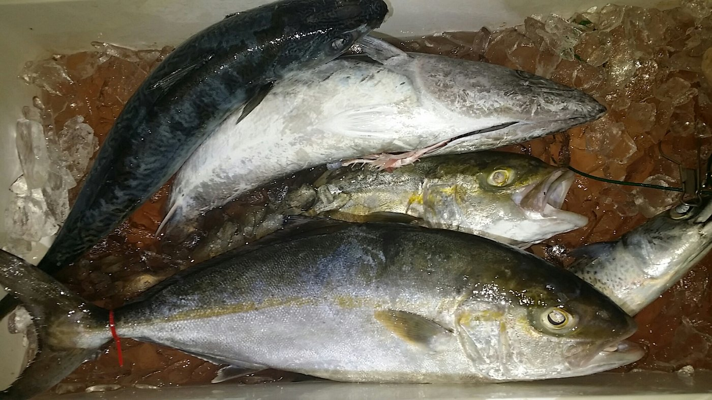 TORADORAさんの投稿画像,写っている魚は