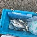 よっちゃんさんの広島県でのクロダイの釣果写真