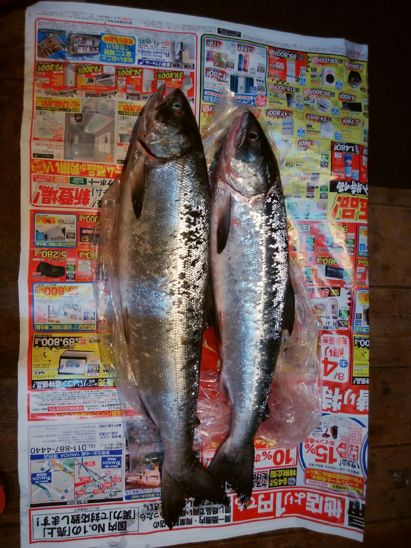 つじさんの投稿画像,写っている魚は
