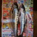 つじさんの北海道広尾郡での釣果写真