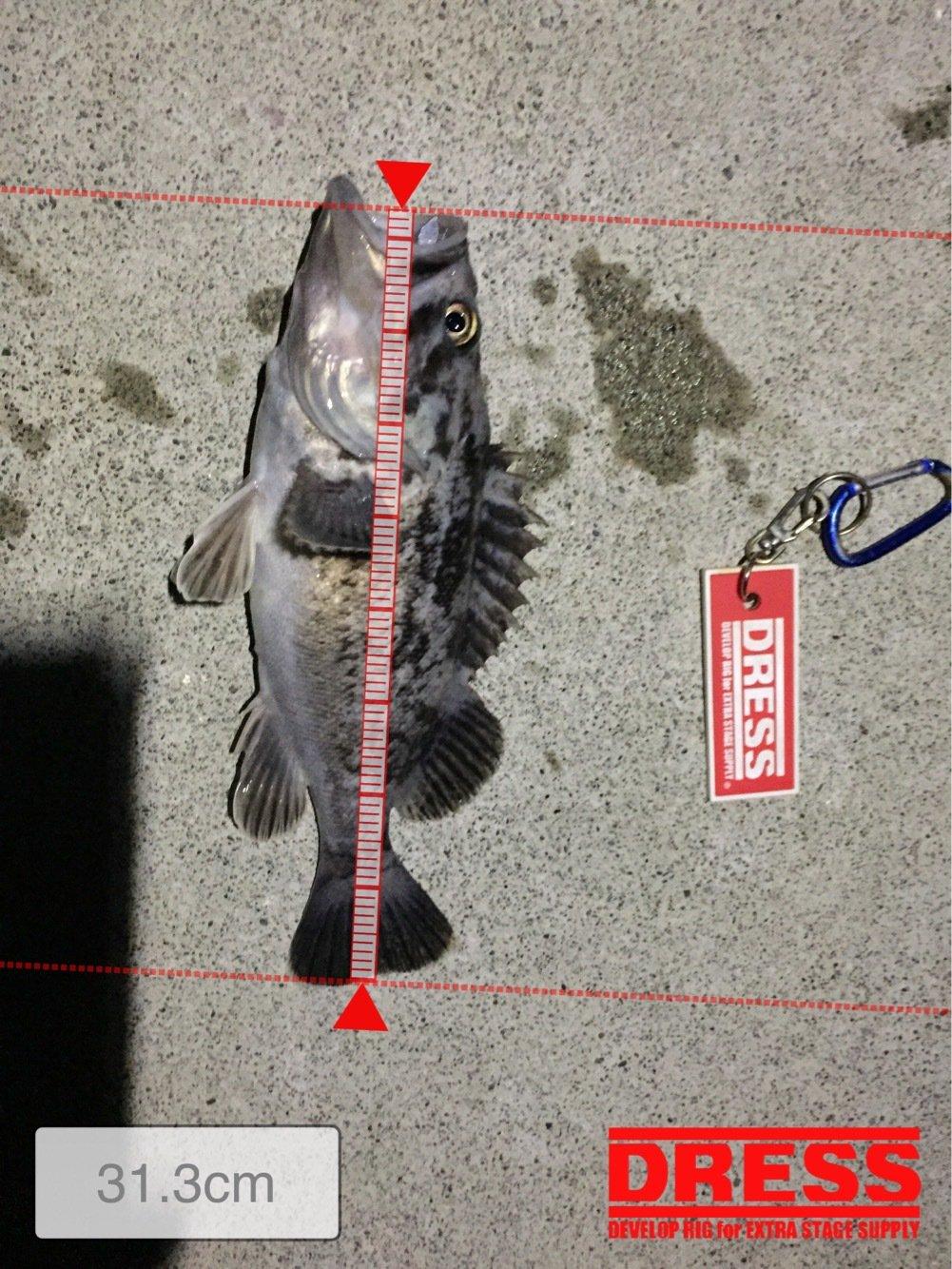 たっかぽんさんの投稿画像,写っている魚はクロソイ