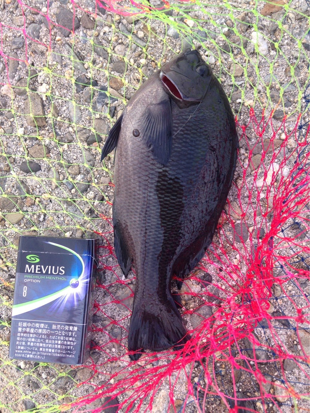 しょーへさんの投稿画像,写っている魚はメジナ