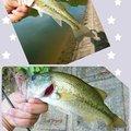 平岡真弓さんの大阪府和泉市での釣果写真
