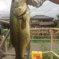 じょうマジェさんの千葉県柏市での釣果写真