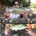 Akiraさんの大分県杵築市での釣果写真