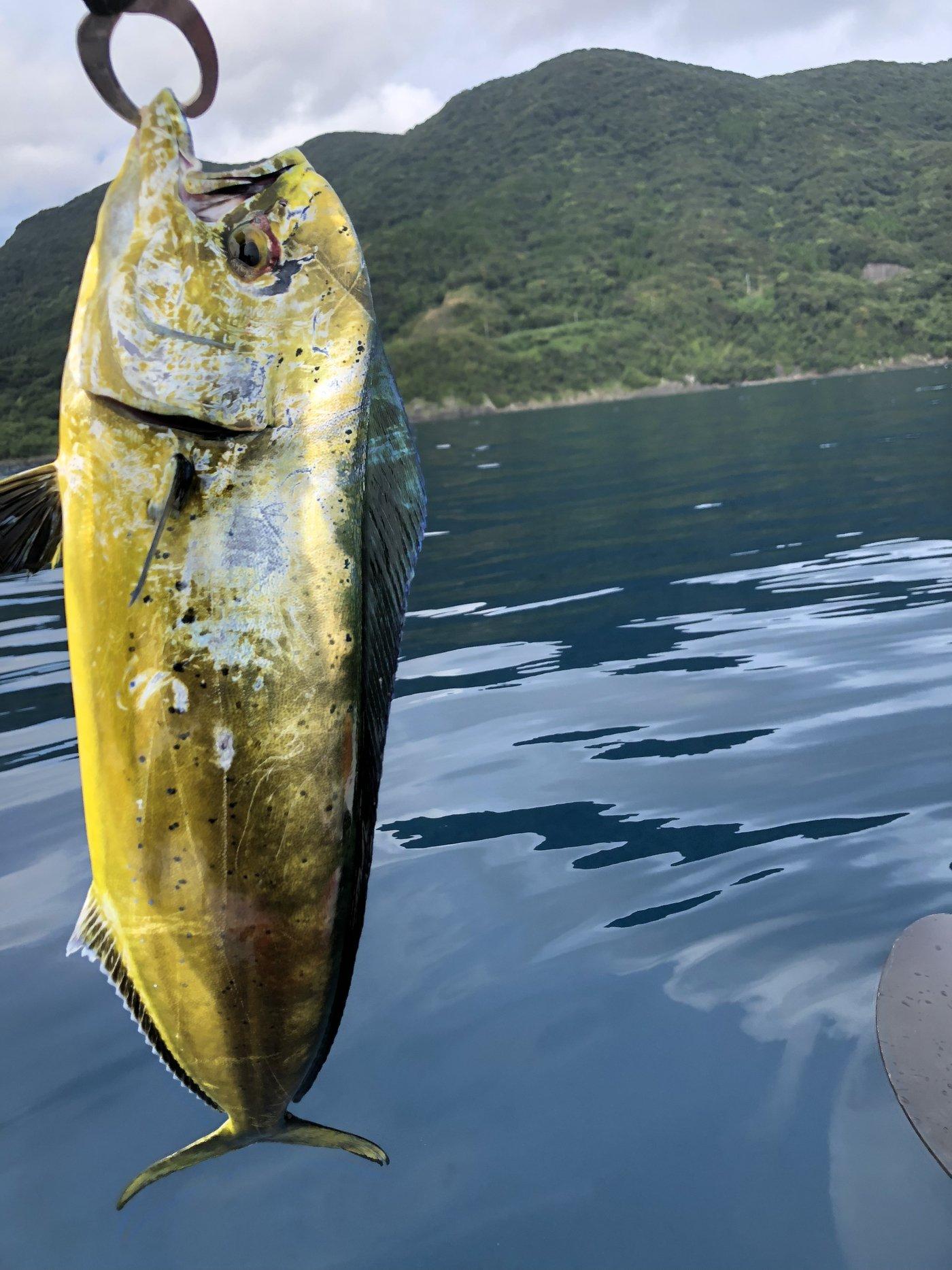 さとしさんの投稿画像,写っている魚はシイラ