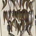 たかっちょさんの兵庫県たつの市での釣果写真