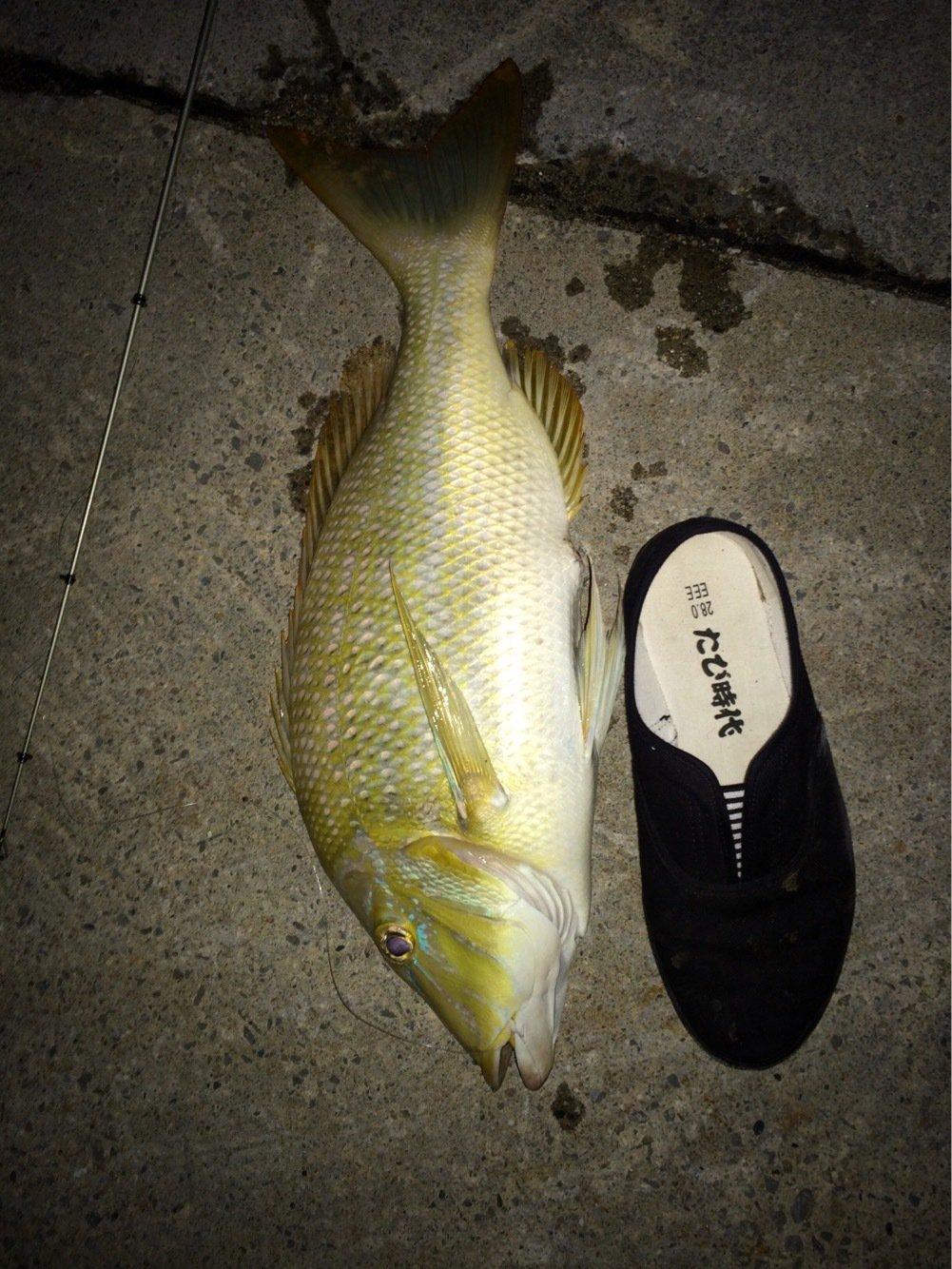 グルさんの投稿画像,写っている魚はハマフエフキダイ