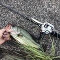 やきとりマスさんの茨城県土浦市での釣果写真