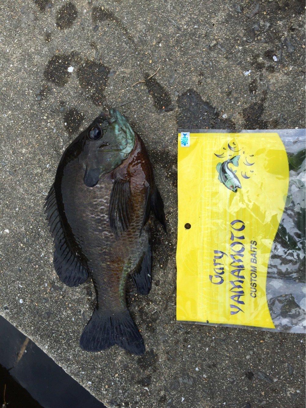 anglerさんの投稿画像,写っている魚はブラックバス