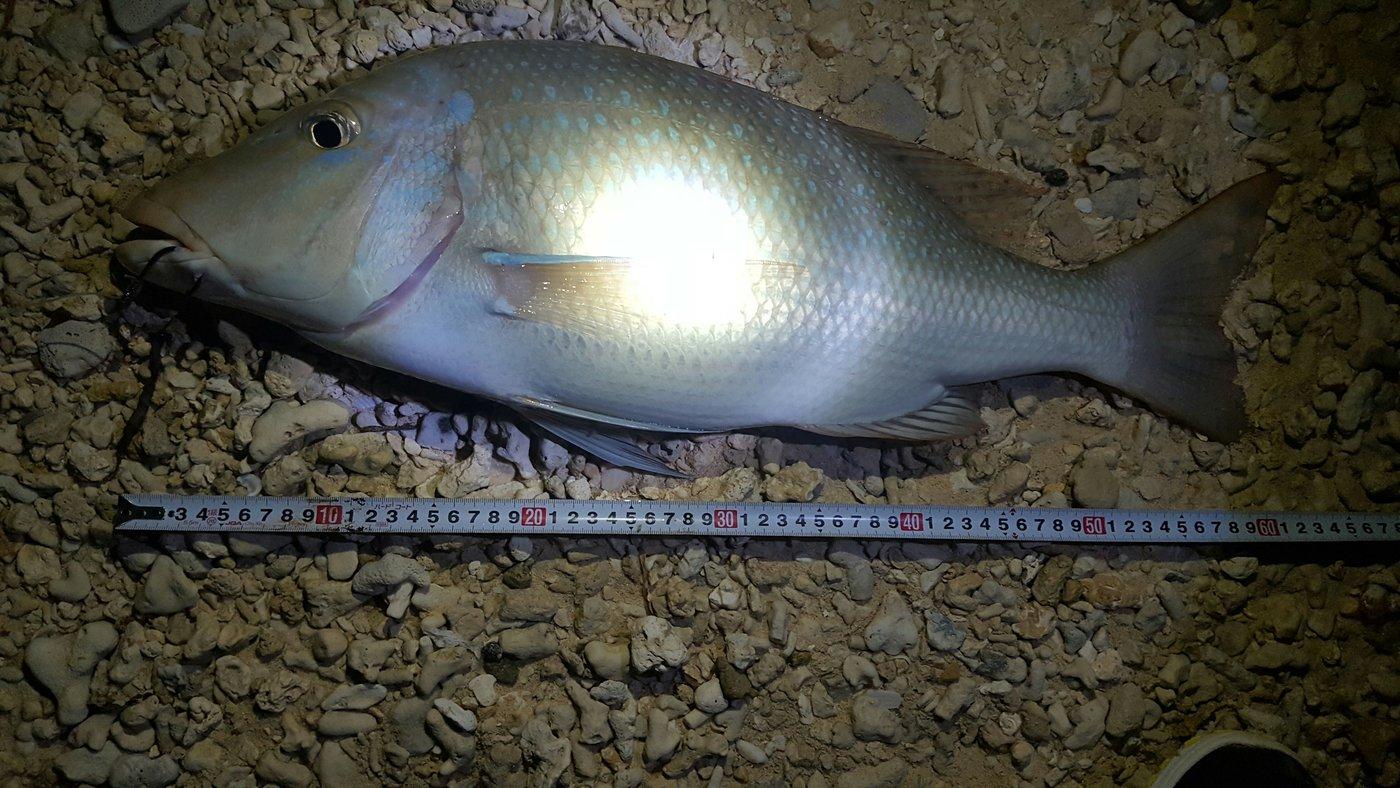 ニノマエさんの投稿画像,写っている魚はハマフエフキダイ