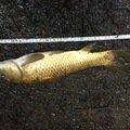 g-ayumuさんの栃木県鹿沼市での釣果写真