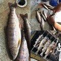 ふくすけさんの徳島県那賀郡での釣果写真