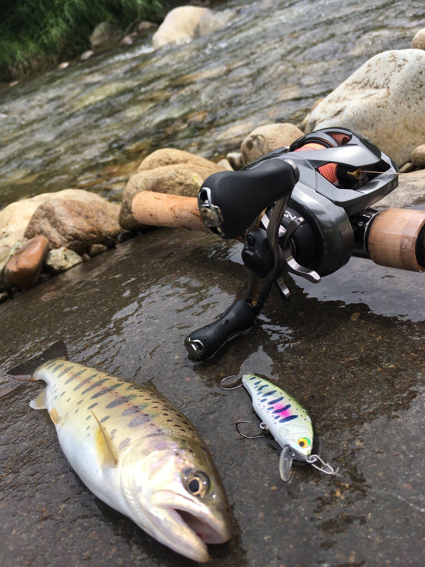 きーくんさんの投稿画像,写っている魚はヤマメ