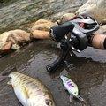 きーくんさんの新潟県南魚沼郡での釣果写真