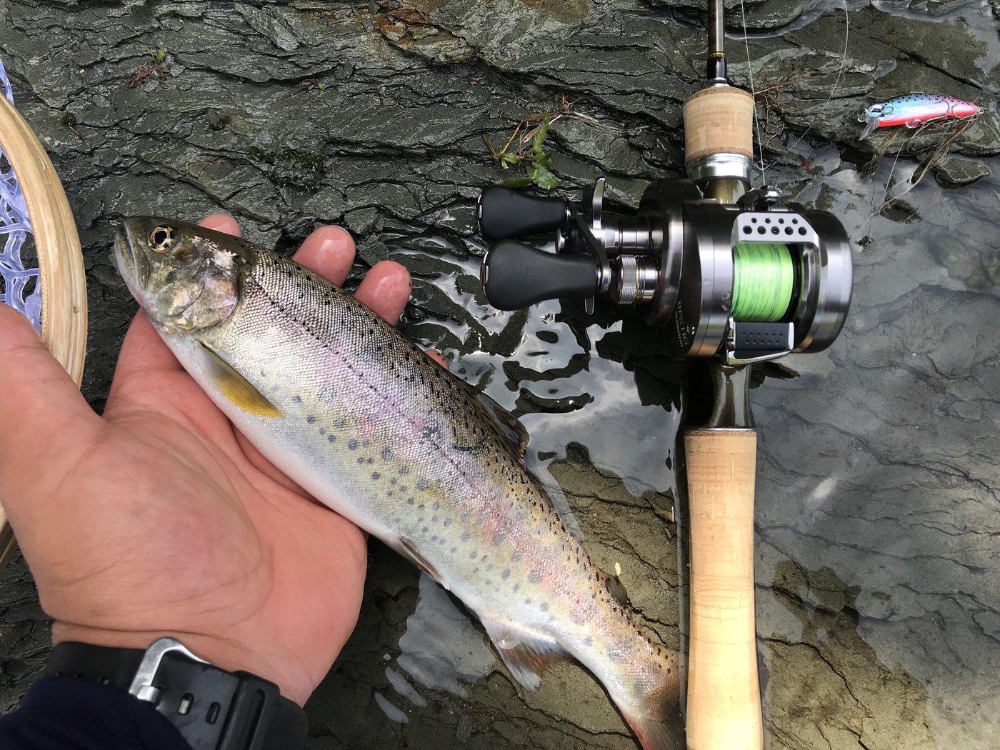 タツヨシさんの投稿画像,写っている魚はヤマメ