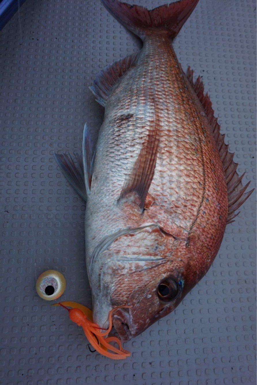 OTAさんの投稿画像,写っている魚はマダイ