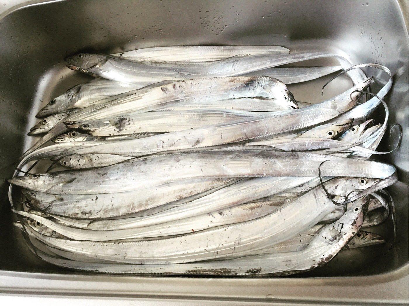 ミヤモトミチヒコさんの投稿画像,写っている魚はタチウオ