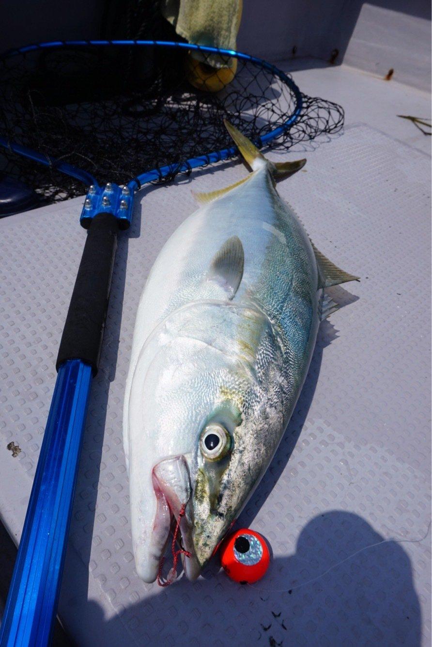 OTAさんの投稿画像,写っている魚はブリ