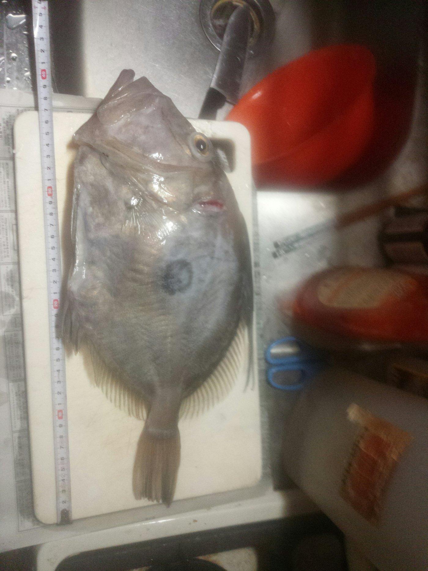 バウアーさんの投稿画像,写っている魚は